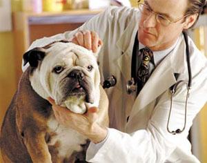 Оказание платных ветеринарных услуг